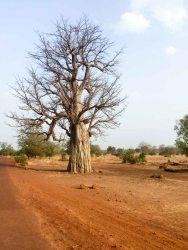 Mali en estado puro