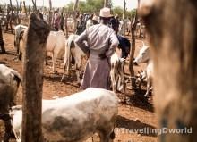 Mercado Fulani de ganado en Nigeria