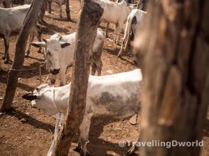 mercado de ganado en Nigeria