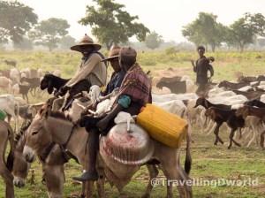 Chicos Fulani controlando el ganado en Nigeria