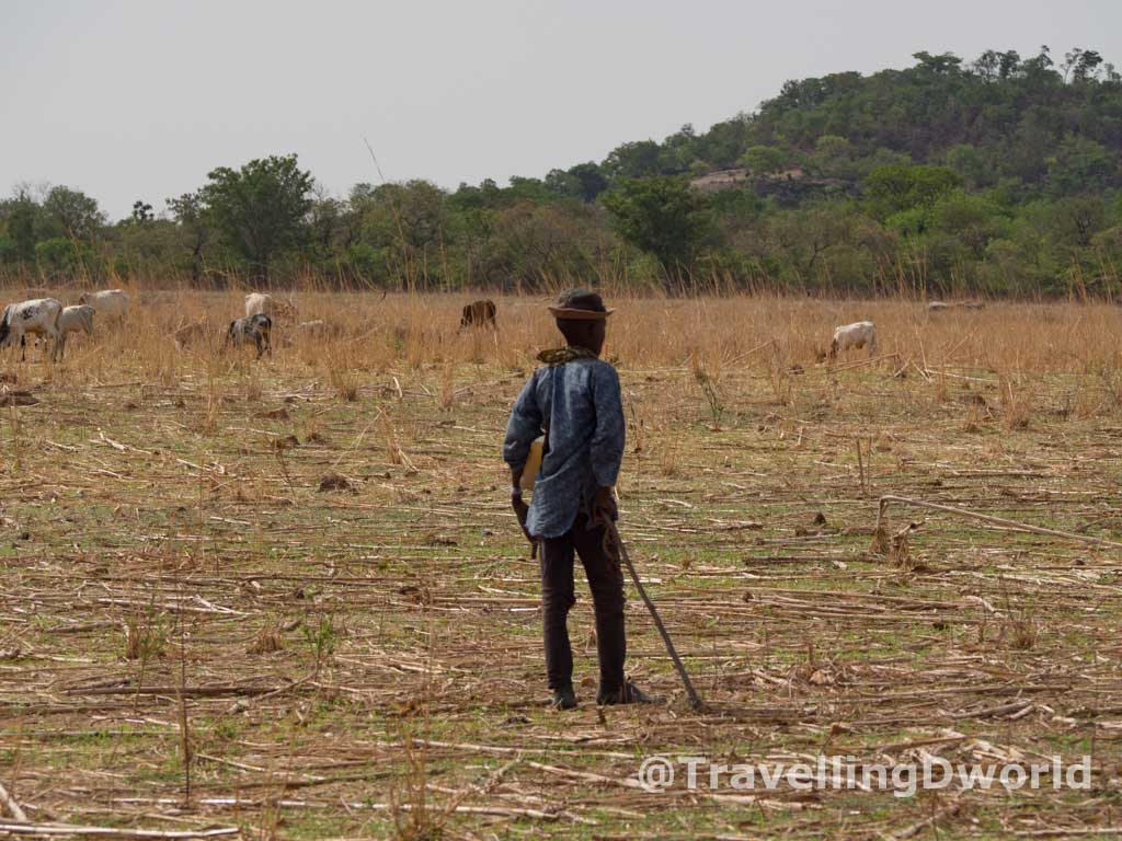 Chico Fulani controlando el ganado
