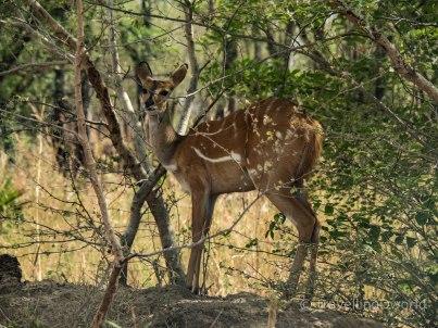 Parque Nacional de la Pendjari