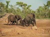 Familia de Elefantes en la Pendjari National Park, Benín