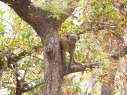 Mono en Parque Nacional de Pedjari, Benín
