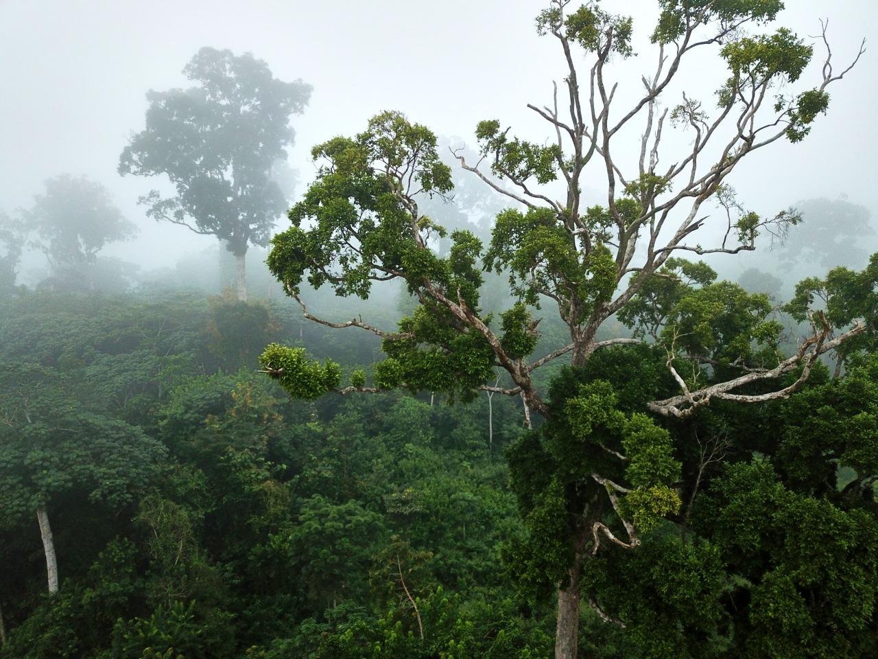 Vista aérea de la selva de Gabón y su niebla