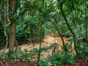 Río en la selva de La Lopé, Gabón