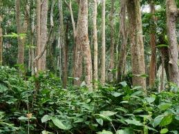 Selva espesa de Gabón