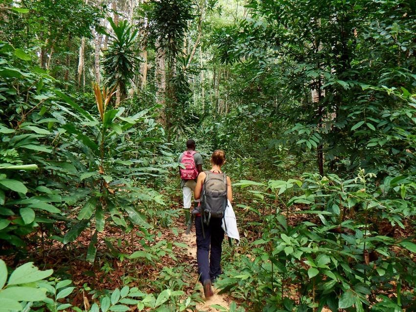 en la selva espesa de Gabón