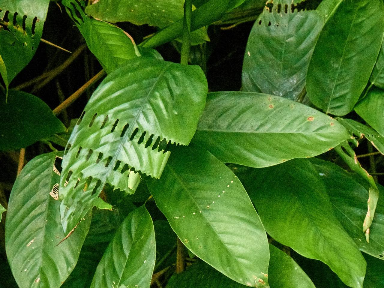vegetación de la selva de Gabón