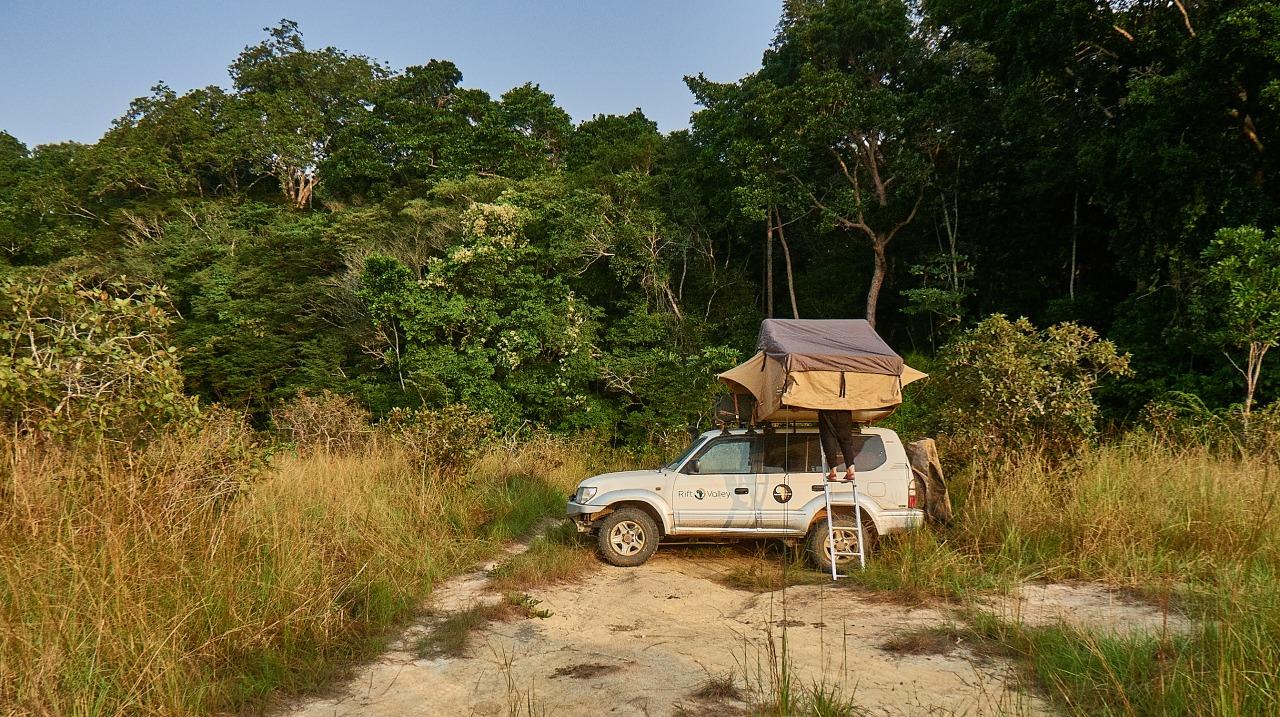 Gabón, entre pisadas de gorila yleopardo.