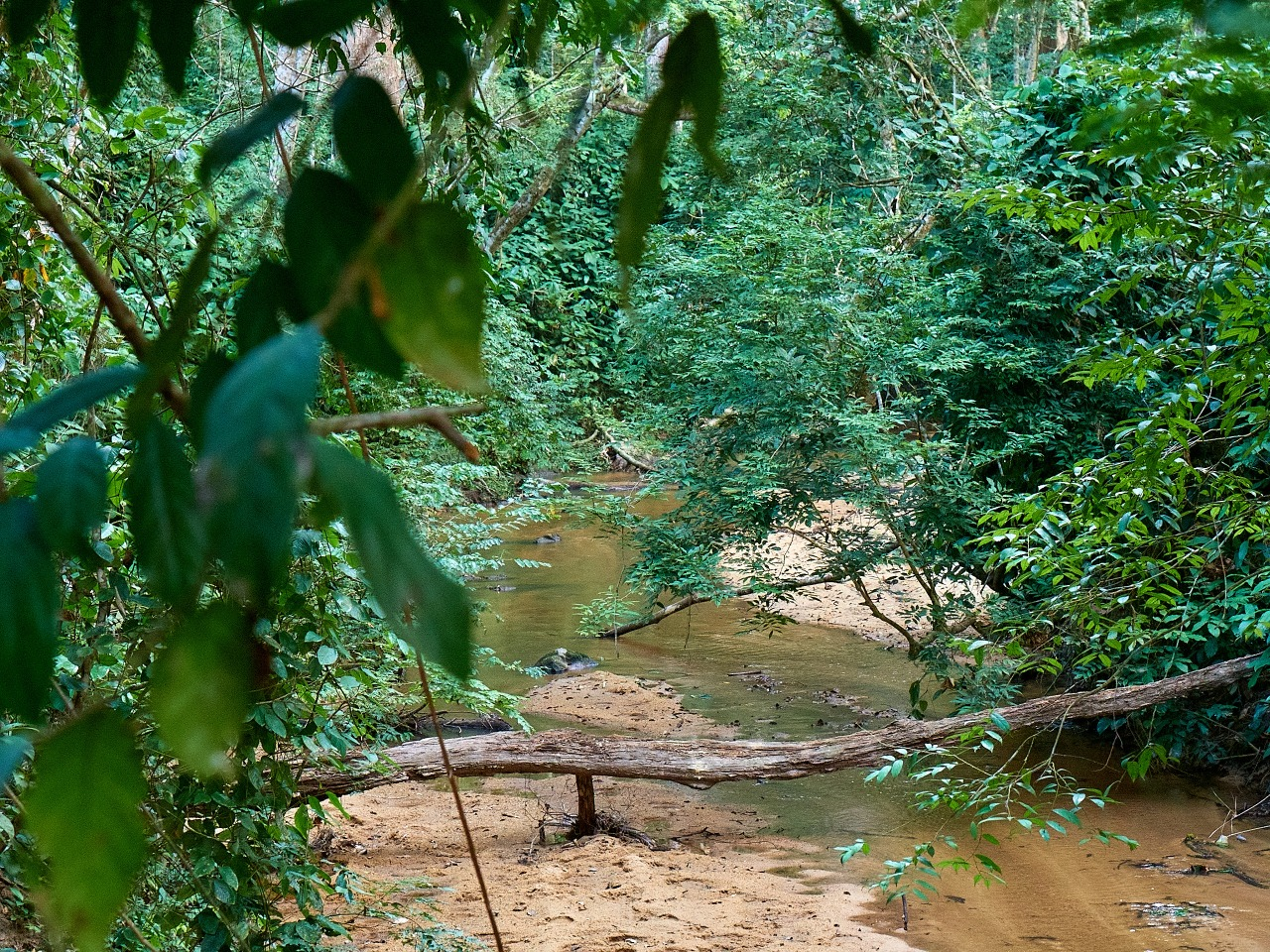 Rio en la selva de La Lopé, Gabón