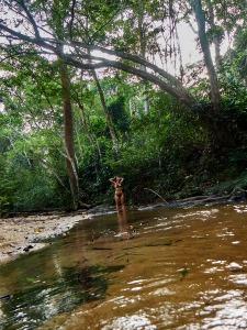 baño en el río de La Lopé, Gabón